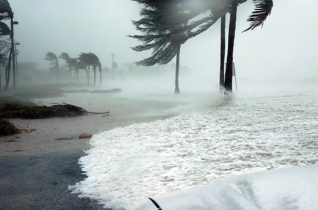 palm-trees-in-a-hurricane